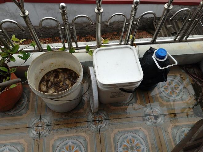 Phân cá được ủ và thích đầy trong nhà để dùng tưới rau sạch trên sân thượng.