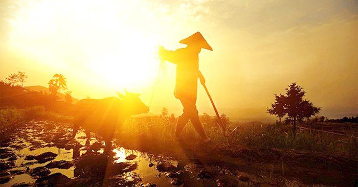 Từ 3 điều ước của lão nông dân, nhìn thấu tâm đố kỵ của con người.