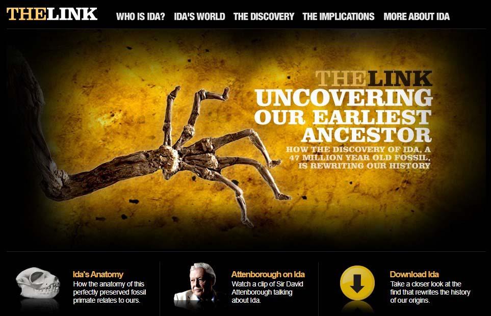 Sự thật về hóa thạch Ida: Tổ tiên loài người hay chỉ là một con vượn cáo? - ảnh 2