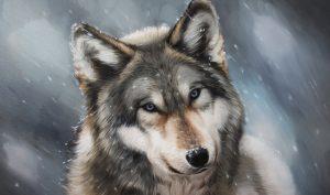 Để kiếp sau có thể đắc thân người, con sói quyết tâm không giết thêm một người nào nữa mà chỉ tu tâm làm việc thiện. (Ảnh: Getty Images)