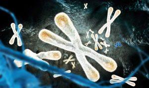 telomere càng dài thì tuổi thọ cũng dài, đương nhiên không bao gồm chuyện ngoài ý muốn.