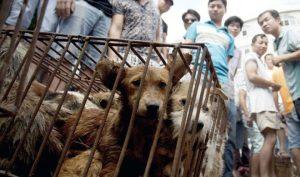 Đài Loan Giết và ăn thịt chó, 2 lao động Việt bị phạt tiền và ngồi tù-ảnh 2